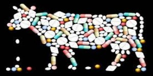 Veterinarians around the World are worried about Anti Microbial Resistance