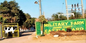 No takers for Military farm cows: Army lower prices to Rs1000 per animal