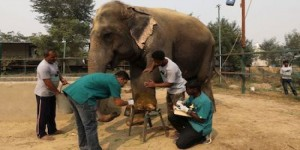 India's First Hospital for Elephants - Now its time for Government to pitch in