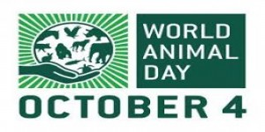 World Animal Day: Sordid Indian Tale of Greed, Apathy and Animal cruelty