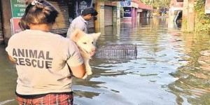 Disaster management for Animals: Are we ready?