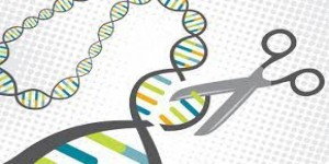 Gene Editing and Animal Husbandry: Future lies with the Science