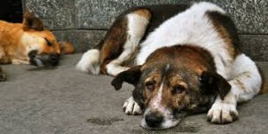 Bareilly to count its stray Dogs in the Livestock Census