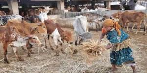 Har Ghar Gaai, a new mantra to revive rural economy