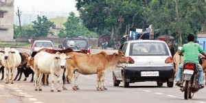 Government serious on Wandering Stray Animals