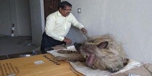 A Vet with a Lion Heart