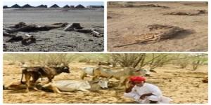 राजस्थान के बाड़मेर में अकाल से पशु-पक्षियों के मौत का तांडव जारी