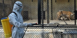 Pandemics and Zoo Biosecurity: A Practical Approach