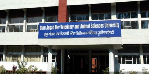 Vet Varsity organises two days international e-symposium on immunology
